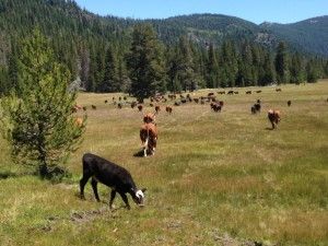 $1.65 Million grant from WCB awarded for forests, wet meadows near Mt. Shasta
