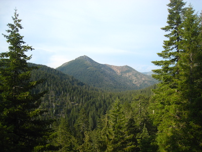 Douglas_Fir_Siskiyou_Mts_Chris_M_Morris_Flickr_SM