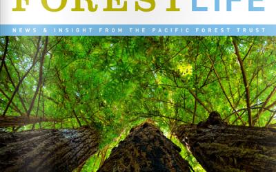 ForestLife, Summer 2015