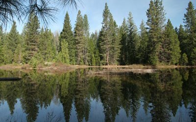 CA Assembly Votes to Recognize Forests as Part of State's Water System