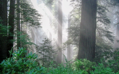 California's Cap-and-Trade Extension Holds Promise for Forests