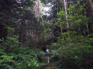 Van Eck forest in California, the first early action carbon offset project under California's program