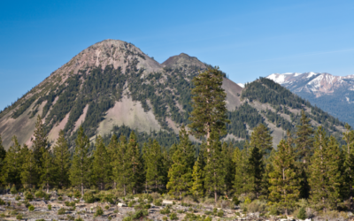 CAL FIRE and Pacific Forest Trust Announce Major Forest Health Project in Siskiyou County
