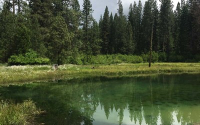 Op Ed: Watershed conservation key to solving California's water problems