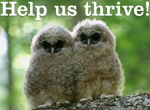 Help forests thrive!