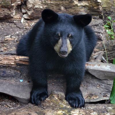 Save Wildlife Habitat - Pacific Forest Trust